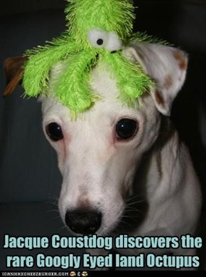 Jacque Coustdog discovers the rare Googly Eyed land Octupus
