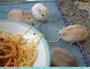Hamsters share some spaghetti