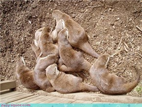 Pile of Otters