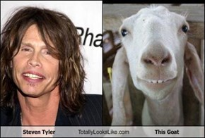 Steven Tyler Totally Looks Like This Goat