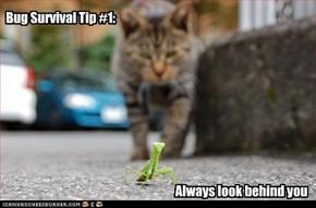 Bug Survival Tip #1: