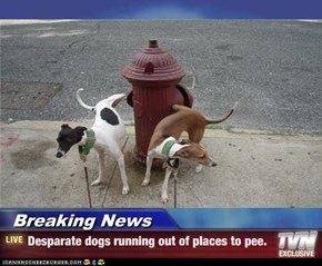 Breaking News - Desparate dogs running out of places to pee.