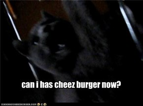 can i has cheez burger now?