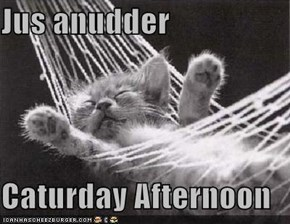 Jus anudder  Caturday Afternoon