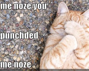 me noze you punchded me noze