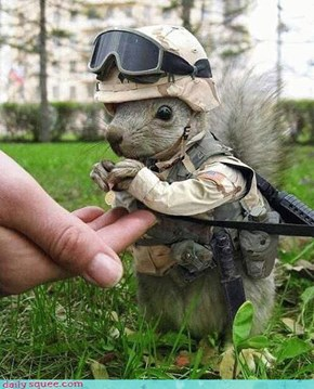 Militarysquirrel