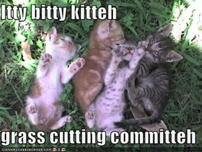 Itty bitty kitteh  grass cutting committeh