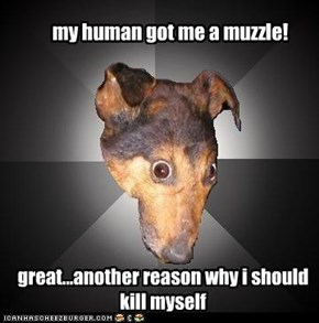 my human got me a muzzle!