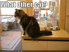 What other cat?