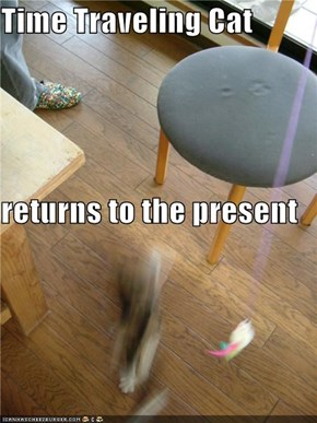 Time Traveling Cat returns to the present