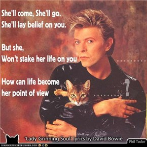 This LOL is for David Bowie fans and Kitteh Lovers Eberywhere!  ... *PLEASE SEE COMMENT BOX*  . . . . . . . . . .