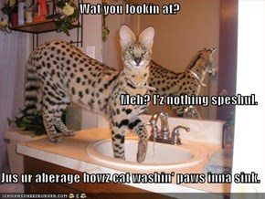 Wat you lookin at? Meh? I'z nothing speshul. Jus ur aberage howz cat washin' paws inna sink.