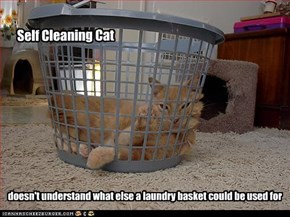 Self cleaning cat