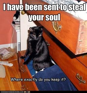 Basement cat's first assignment