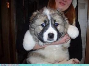 Fat Puppy