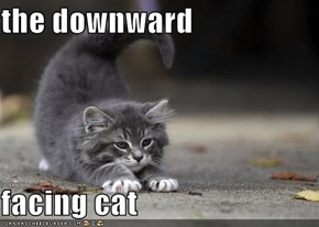 the downward  facing cat