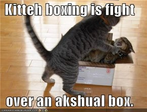 Kitteh boxing is fight  over an akshual box.