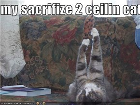 my sacrifize 2 ceilin cat