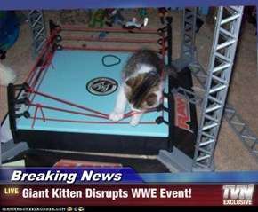 Breaking News - Giant Kitten Disrupts WWE Event!