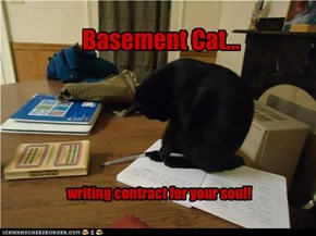 Basement Cat...