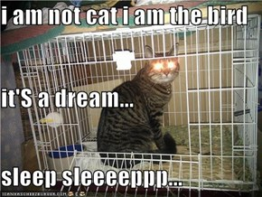 i am not cat i am the bird it'S a dream... sleep sleeeeppp...
