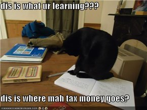 dis is what ur learning???  dis is where mah tax money goes?