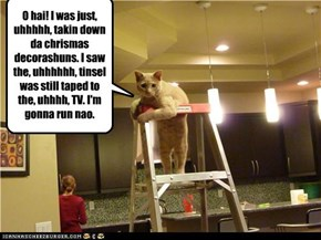 Lie Cat Knows When He Must RUN