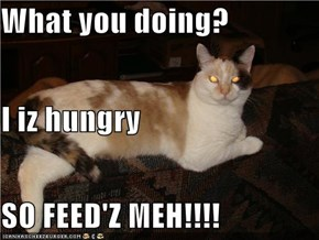 What you doing? I iz hungry SO FEED'Z MEH!!!!