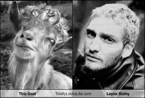 This Goat Totally Looks Like Layne Staley