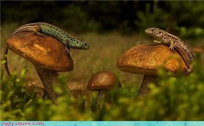 Mushroom Meeting