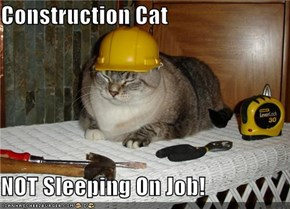 Construction Cat  NOT Sleeping On Job!