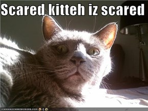 Scared kitteh iz scared