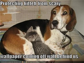 Protecting kitteh from scary  wallpaper coming off wall behind us.