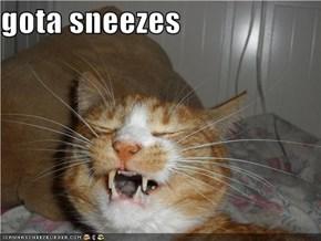gota sneezes