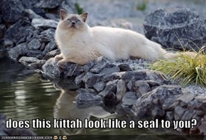 does this kittah look like a seal to you?