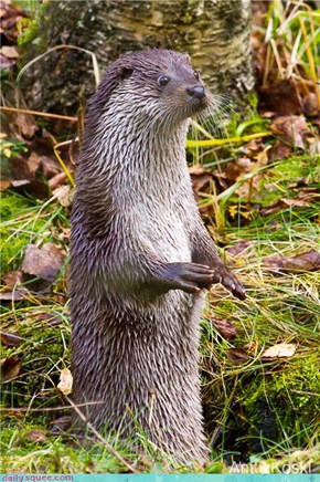 The Puzzled Otter