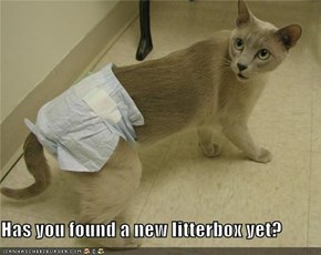 Has you found a new litterbox yet?