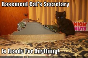 Basement Cat's Secretary   Is Ready For Anything!