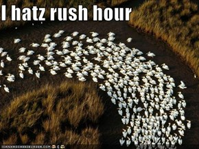 I hatz rush hour