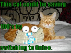 This cat could be saving 100's by switching to Geico.