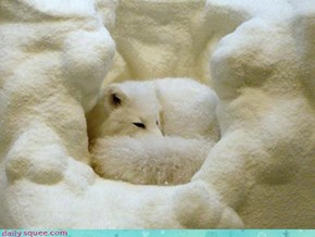 Acting Like Animals: Camouflaged Cuddling