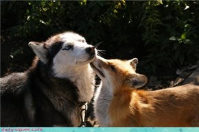 Interspecies Love: Up Close and Personal