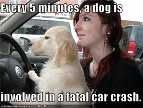 Every 5 minutes, a dog is  involved in a fatal car crash.