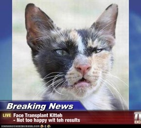 Breaking News - Face Transplant Kitteh  - Not too happy wit teh results