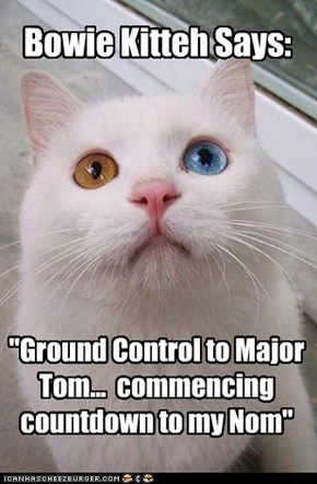 Bowie Kitteh Says: