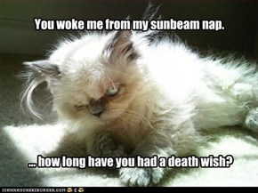 You woke me from my sunbeam nap.