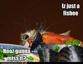 Iz just a fishee