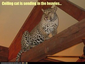 Ceiling cat is sending in the heavies...