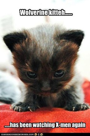 Comic kitten