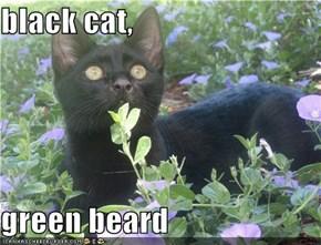black cat,  green beard